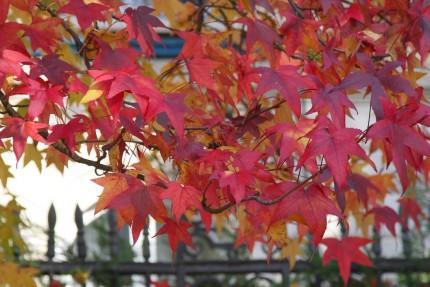 l'automne au jardin public 14