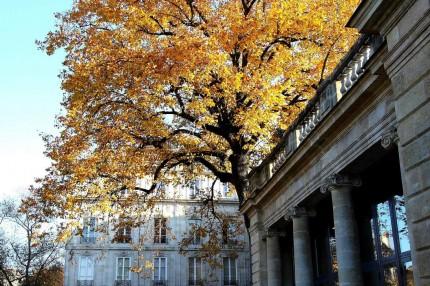 L'automne au jardin public 12