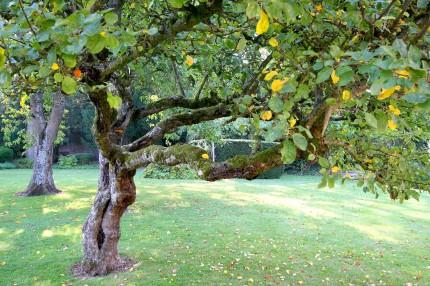 Jardin de l'ancien monastère du Carmel Abbeville