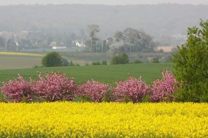 La plaine de France (Baillet en France)