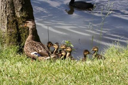Belle famille Colver