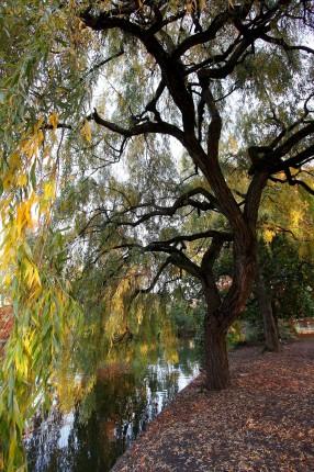 Bordeaux jardin public