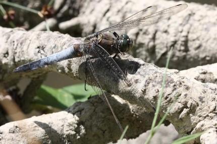 Macro d'insectes