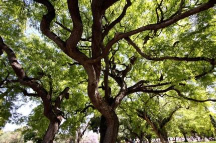 Lisbonne  jardin do Altramar
