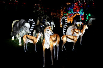 Les lanternes de Gaillac 11