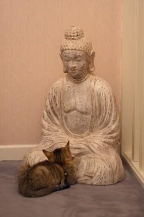Notre chatte en méditation