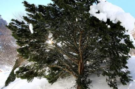 Neige-et-soleil à Cauterêt