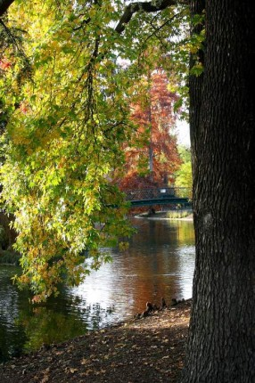L'automne au jardin public 10